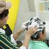洗髪・頭皮マッサージ施術作業の写真